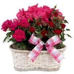ดอกไม้สวยๆ อวยพรวันเกิด แบบที่ (33)
