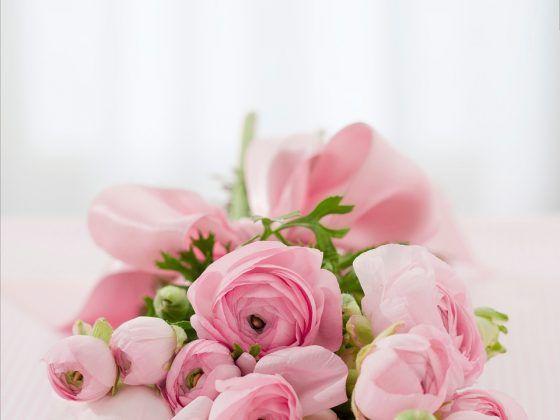 ดอกกุหลาบสีชมพู(Pink Rose)